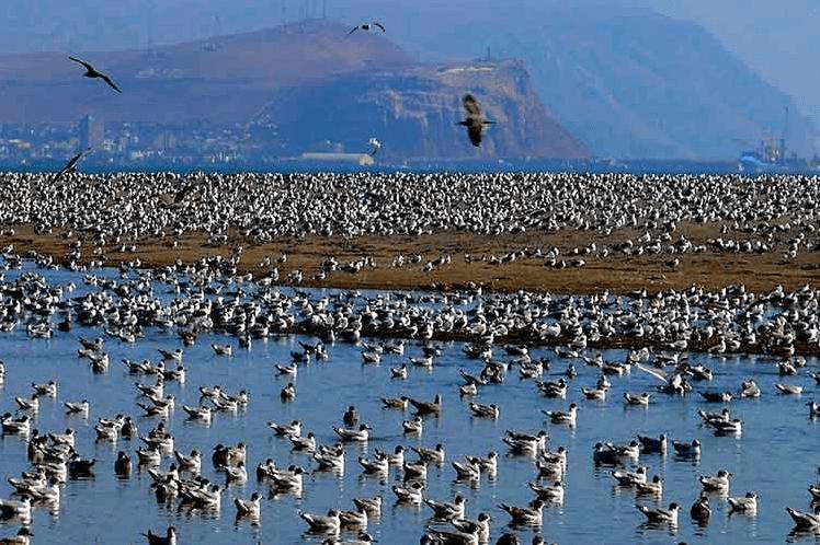 Humedal de Arica: Un pulmón en el desierto de Atacama bajo seria amenaza