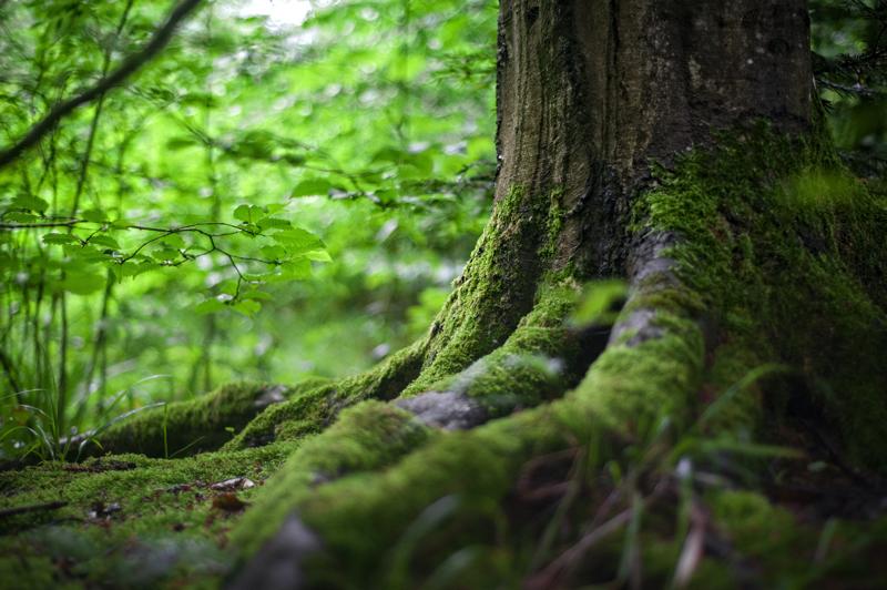 Bosques y crisis climática: porqué no es lo mismo reforestar con bosque nativo que con pinos y eucaliptus