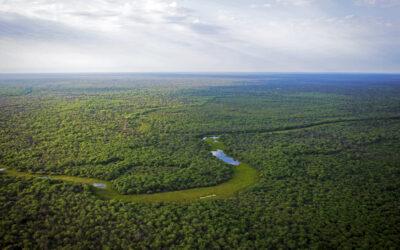 Deforestación en el Gran Chaco: La bomba de carbono que el mundo ignora